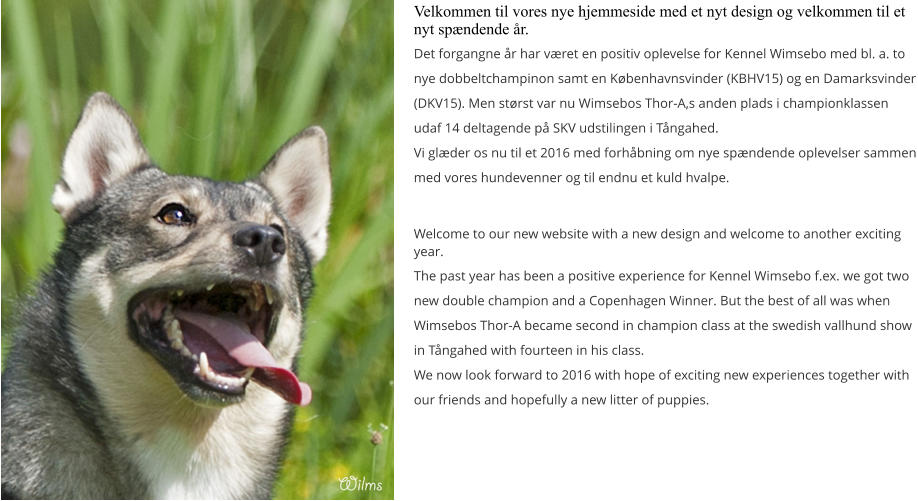 Velkommen til vores nye hjemmeside med et nyt design og velkommen til et nyt spændende år. Det forgangne år har været en positiv oplevelse for Kennel Wimsebo med bl. a. to nye dobbeltchampinon samt en Københavnsvinder (KBHV15) og en Damarksvinder (DKV15). Men størst var nu Wimsebos Thor-A,s anden plads i championklassen udaf 14 deltagende på SKV udstilingen i Tångahed. Vi glæder os nu til et 2016 med forhåbning om nye spændende oplevelser sammen med vores hundevenner og til endnu et kuld hvalpe.  Welcome to our new website with a new design and welcome to another exciting year. The past year has been a positive experience for Kennel Wimsebo f.ex. we got two new double champion and a Copenhagen Winner. But the best of all was when Wimsebos Thor-A became second in champion class at the swedish vallhund show in Tångahed with fourteen in his class. We now look forward to 2016 with hope of exciting new experiences together with our friends and hopefully a new litter of puppies.