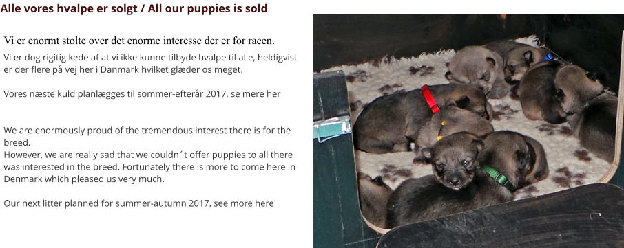 Alle vores hvalpe er solgt / All our puppies is sold Vi er enormt stolte over det enorme interesse der er for racen. Vi er dog rigitig kede af at vi ikke kunne tilbyde hvalpe til alle, heldigvist er der flere på vej her i Danmark hvilket glæder os meget.   Vores næste kuld planlægges til sommer-efterår 2017, se mere her   We are enormously proud of the tremendous interest there is for the breed. However, we are really sad that we couldn´t offer puppies to all there was interested in the breed. Fortunately there is more to come here in Denmark which pleased us very much.  Our next litter planned for summer-autumn 2017, see more here